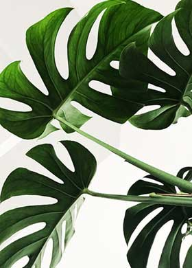 Large plant leafs against a white wall at float spa in London