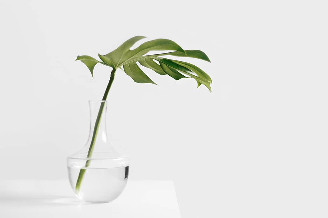 Small green leaf plant in vase on white table at float therapy spa in London